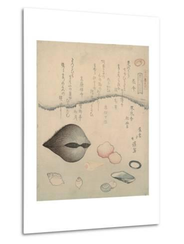 Aragai, Masu?gai, Anagai: Clams-Totoya Hokkei-Metal Print