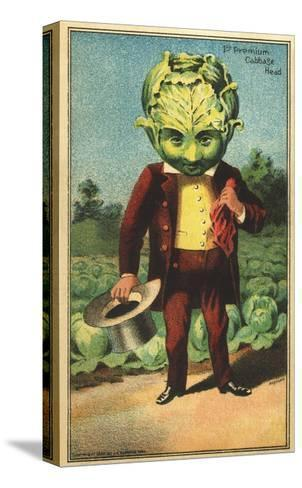 1st Premium Cabbage Head Trade Card--Stretched Canvas Print