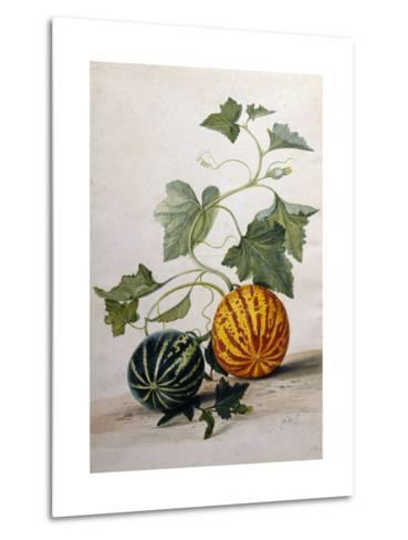 A Study of Gourds-Pieter Withoos-Metal Print