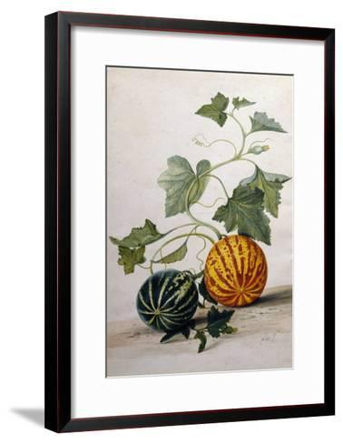 A Study of Gourds-Pieter Withoos-Framed Art Print