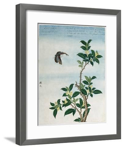 Early 19th-Century Chinese Watercolor of a Cinnamon Plant--Framed Art Print
