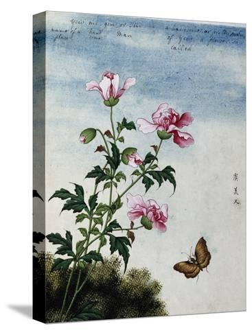 Early 19th-Century Chinese Watercolor of Pink Flowers--Stretched Canvas Print