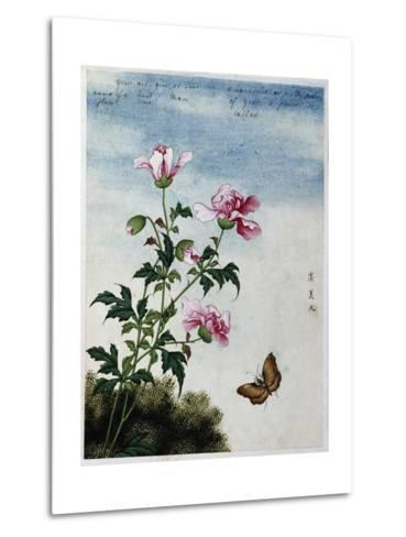 Early 19th-Century Chinese Watercolor of Pink Flowers--Metal Print