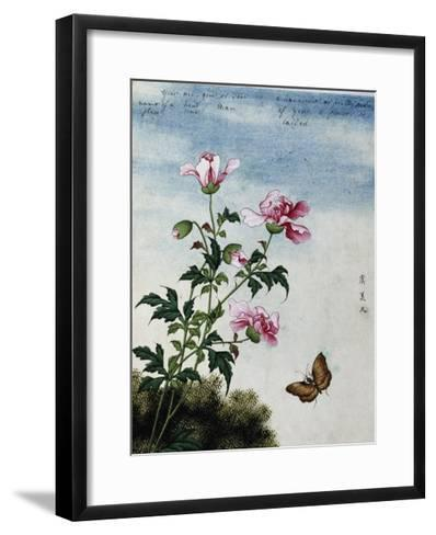 Early 19th-Century Chinese Watercolor of Pink Flowers--Framed Art Print
