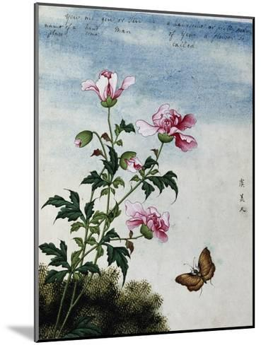 Early 19th-Century Chinese Watercolor of Pink Flowers--Mounted Giclee Print