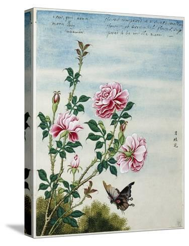 Early 19th-Century Chinese Watercolor of Pink Roses--Stretched Canvas Print