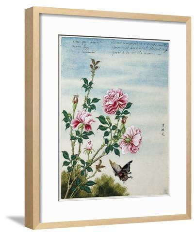 Early 19th-Century Chinese Watercolor of Pink Roses--Framed Art Print