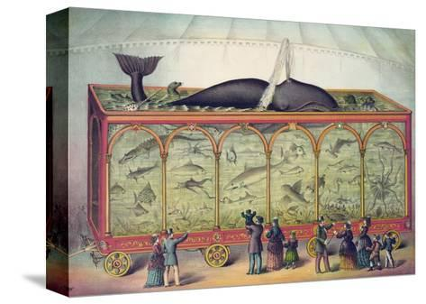 Lithograph of 19th Century Traveling Aquarium--Stretched Canvas Print