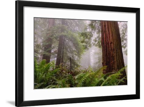 Fog and Redwood Grove, California Coast-Vincent James-Framed Art Print