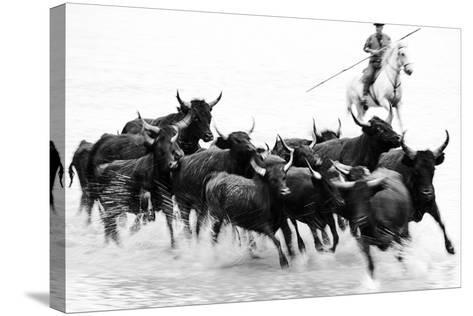 Black Bulls of Camargue and their Herder Running Through the Water, Camargue, France-Nadia Isakova-Stretched Canvas Print