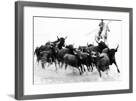 Black Bulls of Camargue and their Herder Running Through the Water, Camargue, France-Nadia Isakova-Framed Art Print