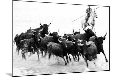 Black Bulls of Camargue and their Herder Running Through the Water, Camargue, France-Nadia Isakova-Mounted Photographic Print