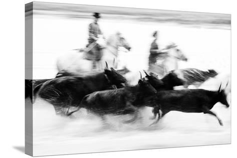 Black Bulls of Camargue and their Herders Running Through the Water, Camargue, France-Nadia Isakova-Stretched Canvas Print