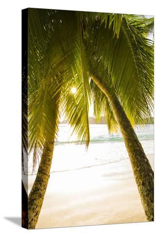 Palm Trees and Tropical Beach, Southern Mahe, Seychelles-Jon Arnold-Stretched Canvas Print