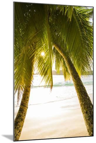 Palm Trees and Tropical Beach, Southern Mahe, Seychelles-Jon Arnold-Mounted Photographic Print