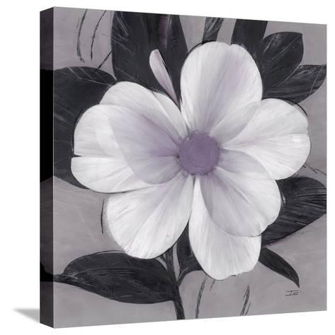 Sorbet Bloom 1-Ivo Stoyanov-Stretched Canvas Print
