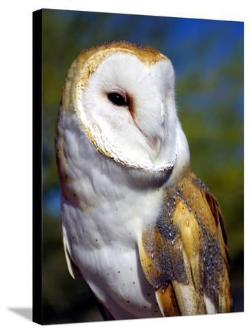 Barn Owl-Douglas Taylor-Stretched Canvas Print