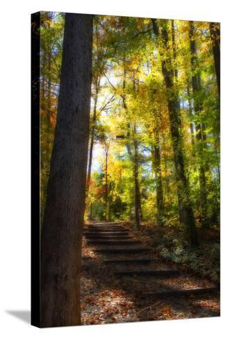 Autumn Light II-Alan Hausenflock-Stretched Canvas Print
