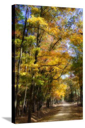 Goose Pond Lane IV-Alan Hausenflock-Stretched Canvas Print