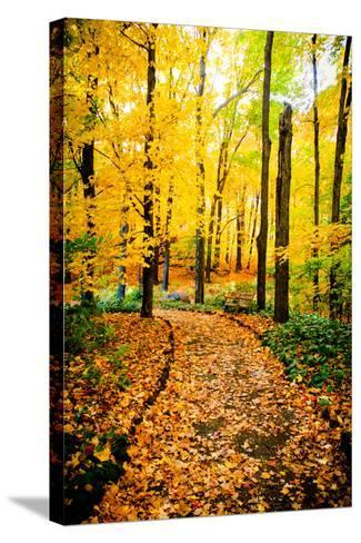 Autumn Pathway IV-Beth Wold-Stretched Canvas Print