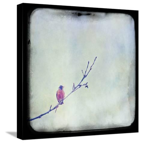 I Sing Alone-Roberta Murray-Stretched Canvas Print