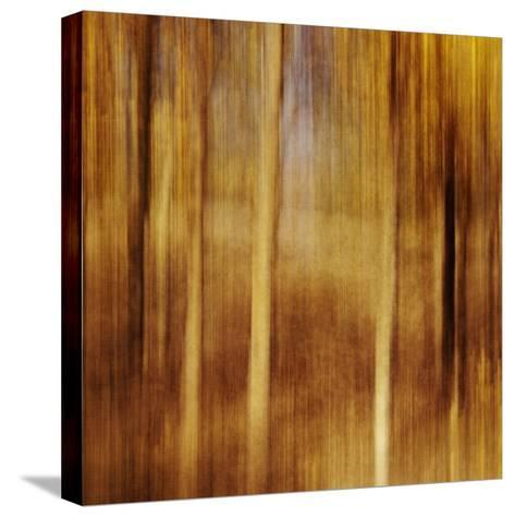 Sweeping Souls-Roberta Murray-Stretched Canvas Print