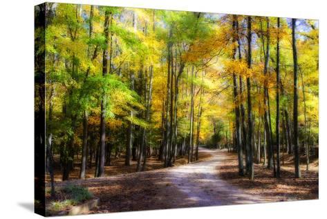 Goose Pond Lane II-Alan Hausenflock-Stretched Canvas Print