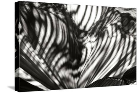 Palm of Shadows-Alan Hausenflock-Stretched Canvas Print