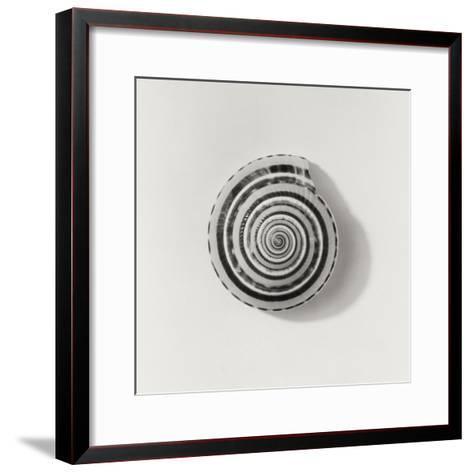 Seashell-Graeme Harris-Framed Art Print