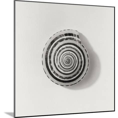 Seashell-Graeme Harris-Mounted Photographic Print