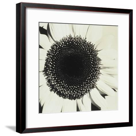 Sunflower-Graeme Harris-Framed Art Print