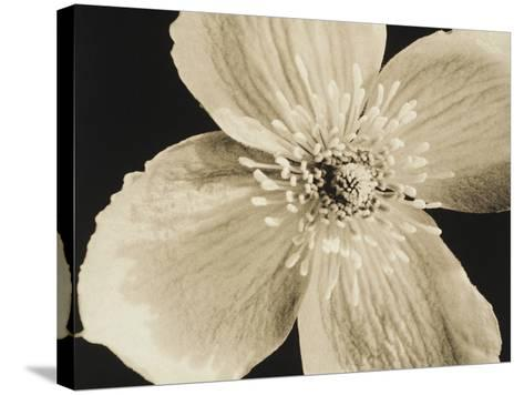 Flower-Graeme Harris-Stretched Canvas Print