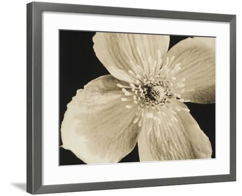 Flower-Graeme Harris-Framed Art Print