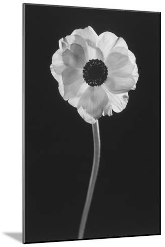 Flower-Graeme Harris-Mounted Photographic Print