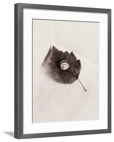 Seashell and Leaf-Graeme Harris-Framed Art Print