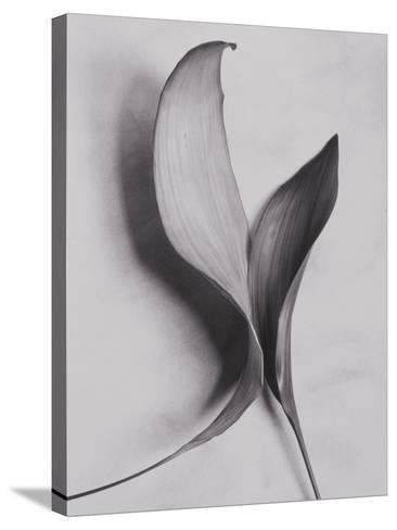 Leaves-Graeme Harris-Stretched Canvas Print
