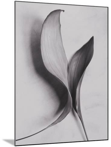 Leaves-Graeme Harris-Mounted Photographic Print