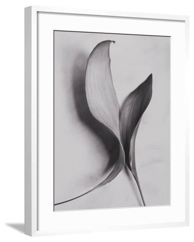 Leaves-Graeme Harris-Framed Art Print