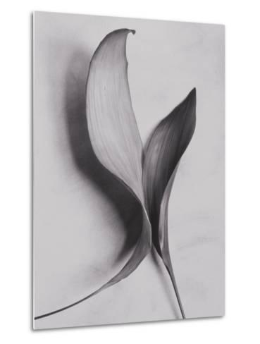 Leaves-Graeme Harris-Metal Print