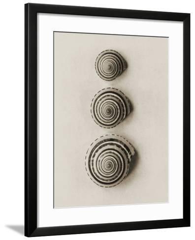 Seashells-Graeme Harris-Framed Art Print
