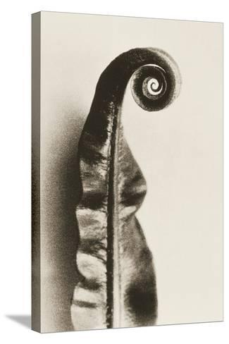 Fern Frond-Graeme Harris-Stretched Canvas Print