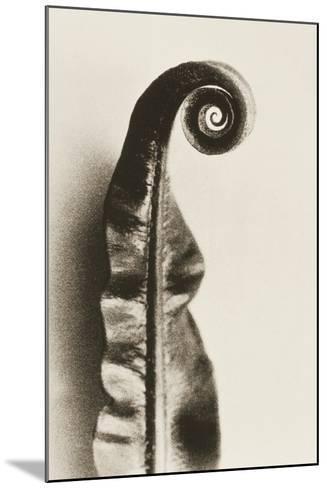 Fern Frond-Graeme Harris-Mounted Photographic Print