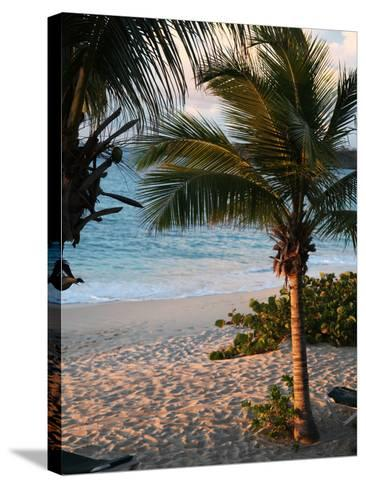 Sunset Palms II-Susan Bryant-Stretched Canvas Print