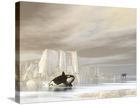 Two Killer Whales Swimming Near Icebergs on a Cloudy Day--Stretched Canvas Print
