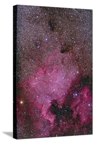 Ngc 7000 and the Pelican Nebula--Stretched Canvas Print