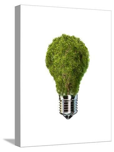 Light Bulb with Tree Inside Glass, Isolated on White Background--Stretched Canvas Print