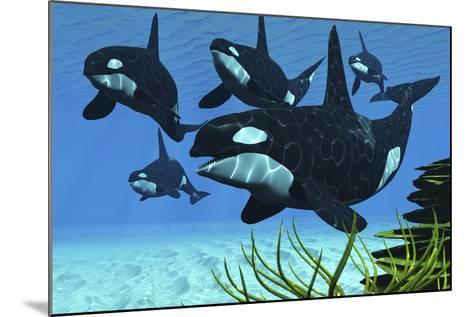 A Pod of Killer Whales Swim Along a Reef Looking for Fish Prey--Mounted Art Print