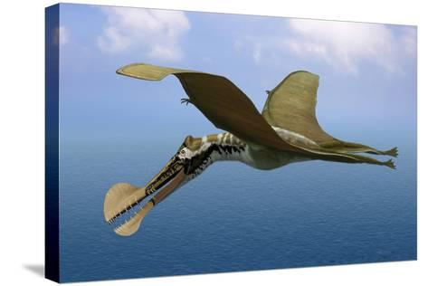 Tropeognathus Mesembrinus, a Large Pterosaur from the Late Cretaceous Period--Stretched Canvas Print
