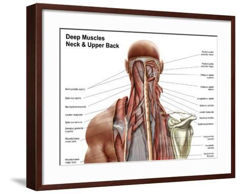 Human Anatomy Showing Deep Muscles in the Neck and Upper Back--Framed Art Print