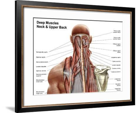Human Anatomy Showing Deep Muscles in the Neck and Upper Back Art ...